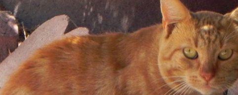 Close-up of orange cat