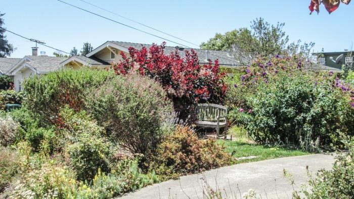 splendidly overgrown garden with wooden garden bench on Carmel Ave in Albany, CA